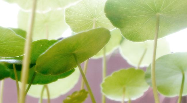 Ecosostenibile: un percorso di cambiamento, nell'interesse di tutti
